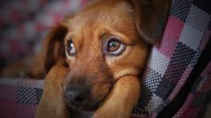 dog, cute, animal